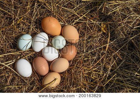 Group of eggs recently laid on the fam