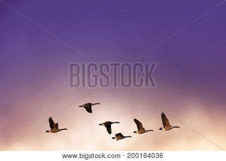 Beautiful sky on sunset or sunrise with flying birds natural background with copy space