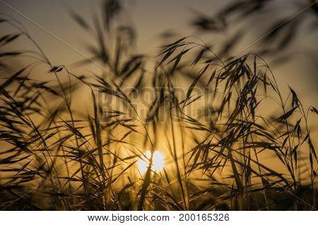 Plants in summer steppe in sunset Kazakhstan.