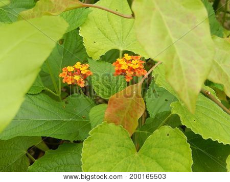 These are beautiful tropical flowers in the Amazon forest