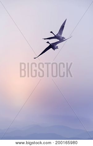 Birds over purple sky environment or ecology concept