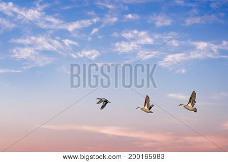 Beautiful sky over beautiful sky with flying birds natural background with copy space