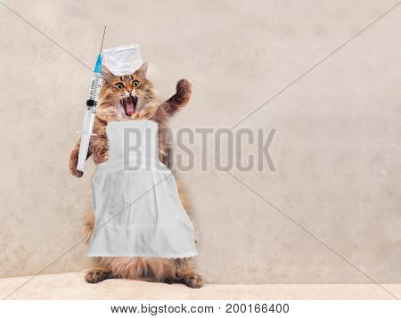 The Big Shaggy Cat Is Very Funny Standing.concept Of Medicine 3
