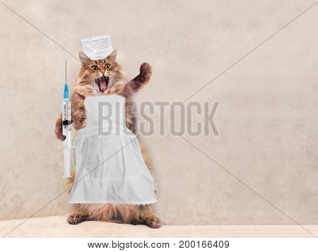The Big Shaggy Cat Is Very Funny Standing.concept Of Medicine 6