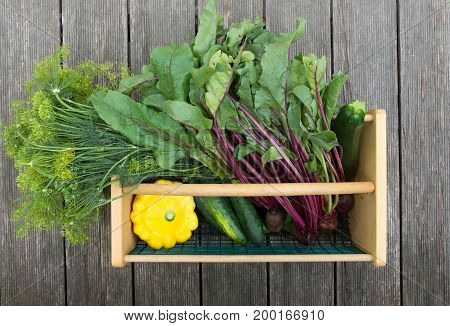 Dill, beets with attached greens,cucumbers, yellow pattypan squash and zucchini picked fresh from the garden and placed in a wire and wood basket. The dill and beets are at the top facing the same direction. Photographed on weathered wood planks.