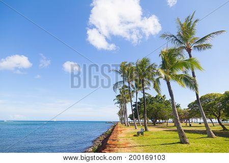 Palm grove near water on the tropical island Hawaii USA. Tall palm trees of Waikiki beach picnic area.