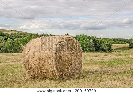 Round ton bale of hay in a field with a cloudy sky and a hint of blue