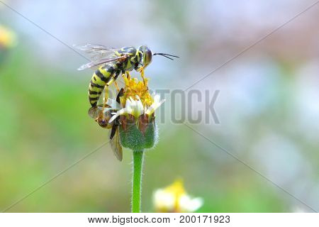 yellow jacket wasp perched on the beautiful flower.