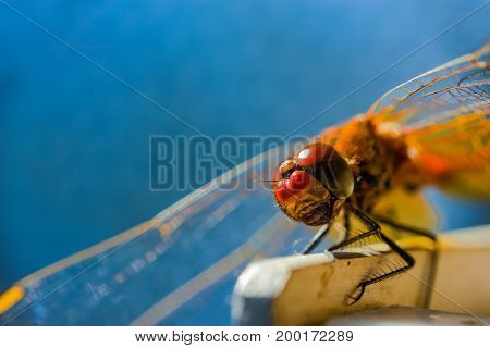 Dragonfly sitting on a wooden board on background of blue sky, selective focus, closeup, macro