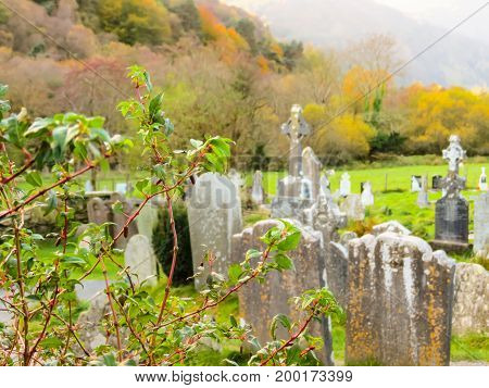 Ancient cemetery in monastic site Glendalough. Glendalough Valley, Wicklow Mountains National Park, Ireland. Selective focus