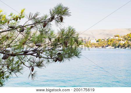 Scenic picture of dalmatian coastline adriatic seashore near Trogir Croatia on summertime