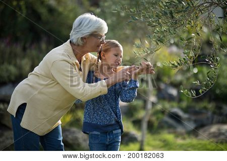 Smiling granddaughter and grandmother touching tree in garden