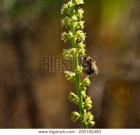 Bee on the branch of small wild flowers