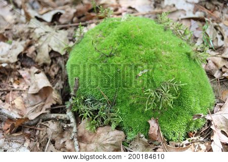 Green moss in the forest in summer season