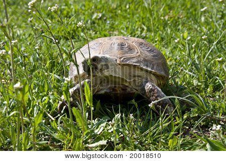 Turtle On Land