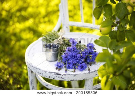 Bouquet of cornflowers on the old chair under the Apple tree in the summer garden