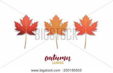 Autumn leaves. Fall leaves design collection for ad, banner, background etc. Autumn vector leaves isolated on white.