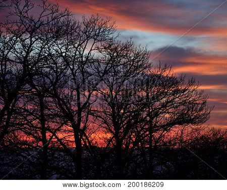 Silhouettes of trees at dawn with colorful cloudy sky background