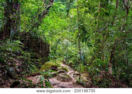 Tree Roots And Green Forest, Landscape Rain Forest National Park In Thailand