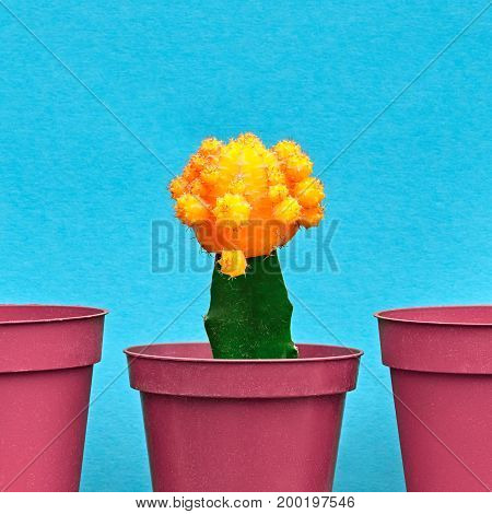 Yellow Cactus. Minimal Stillife. Art Gallery Fashion Design. Concept on Blue background. Creative Style. Detail