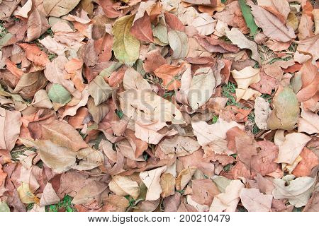 dry leaf texture background with copy space add text