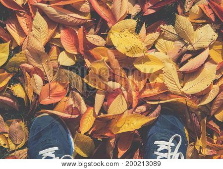 Point of view from above to the ground covered with golden yellow fall leaves in autumn park and modern sport shoe sneakers