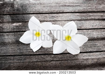Flowers on woodTexture wooden with plumeria flowerMassage and spa background