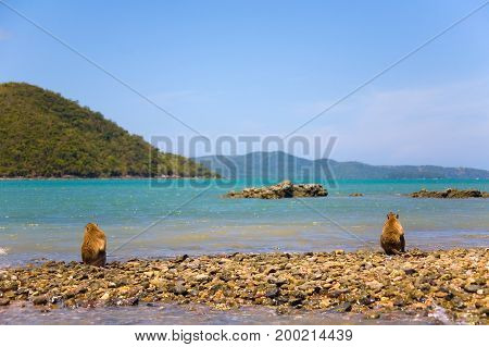 Two monkeys sit on the shore of the ocean. Thailand.