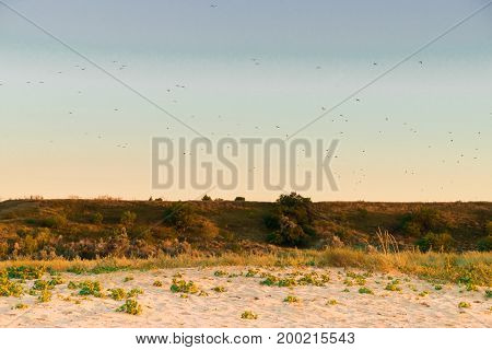 Peaceful evening rural landscape of place next to sea with trees and birds flyng in the sky