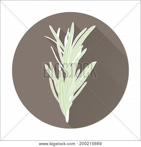 Fresh rosemary herbs. Aromatic leaves used to season meats poultry stews soups. Flat icon with long shadow effect in stylish colors