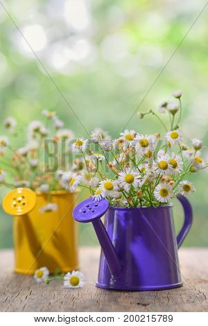 Marguerite Daisy Flowers in small bucket
