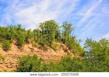 Picturesque image of green trees growing or yellow rock