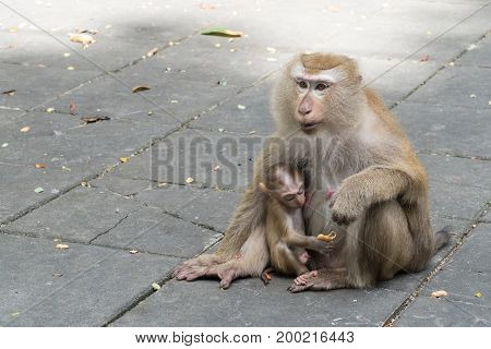 Mother monkey and baby monkey sitting on Flooring