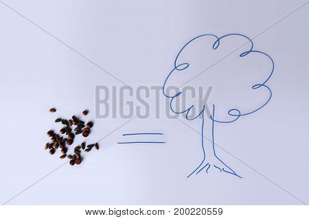 Little red and yellow tree planting seed in white background