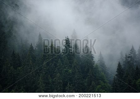 Misty landscape with fir forest in hipster vintage retro style, natural background
