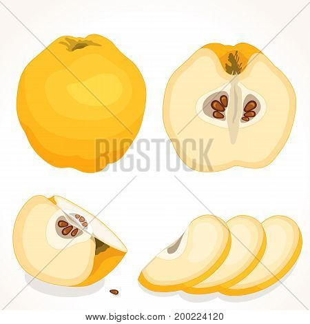 Vector quince. Set of whole, sliced, half of yellow quince isolated on white background. Vector illustration.