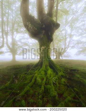 Tree roots at Gorbea Natural Park in Spain