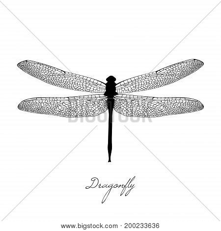 Black Dragonfly On White Background Isolated. Hand-drawn Vector Illustration In The Vintage Style. C