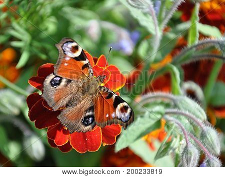 detail view colored animal butterfly in garden