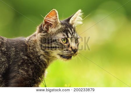 cute domestic kitten portrait in the garden green colorful background with bokeh