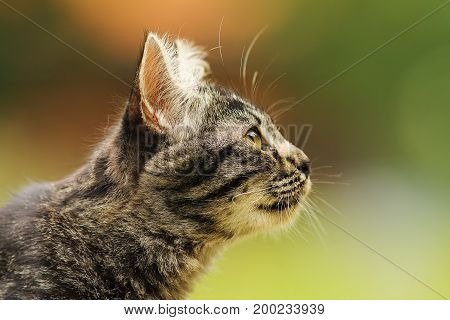portrait of a cute striped curious kitten profile view of head with space for your text