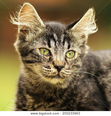 cute striped kitten portrait domestic beautiful animal face