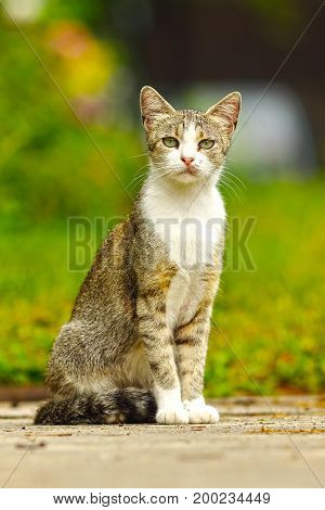 mottley domestic cat standing on garden alley