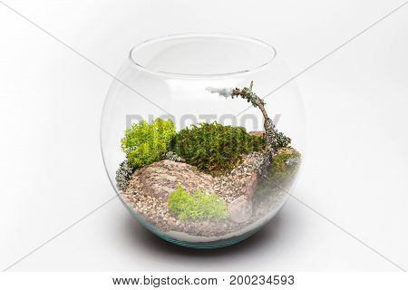 Moss terrarium in a round glass vase isolated on white background