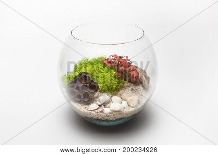 Fittonia terrarium in a round glass vase isolated on white background