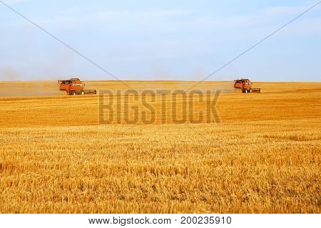 Two Combine Harvesters Cutting Wheat, Summer Landscape Of Endless Fields Under Blue Sky With Clouds.