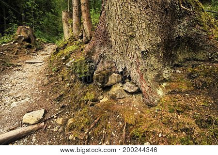 Forest trail in the Tyrolean Alps in summer