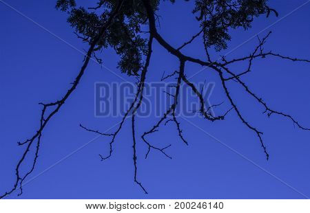 Brilliant blue sky background with bare branches filling the photograph in an interesting pattern.