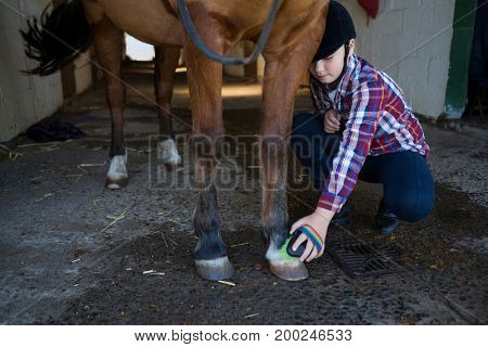 Girl grooming the horse in the stable
