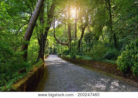 Cobbled footpath between old trees covered with moss in public park of Sintra at sunrise. Portugal